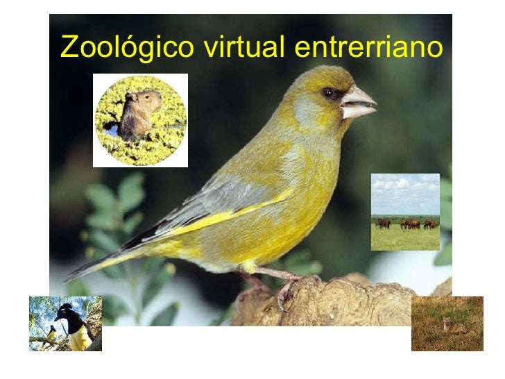 Zoológico virtual entrerriano