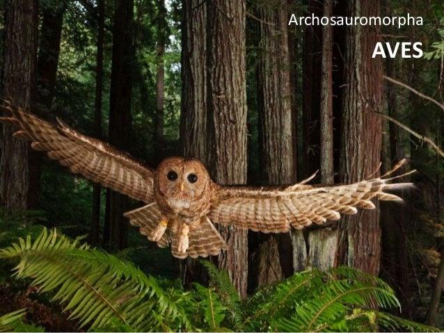 AVES Archosauromorpha