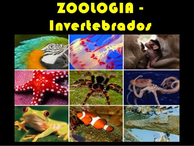 ZOOLOGIA Invertebrados PROFESSOR VASCO