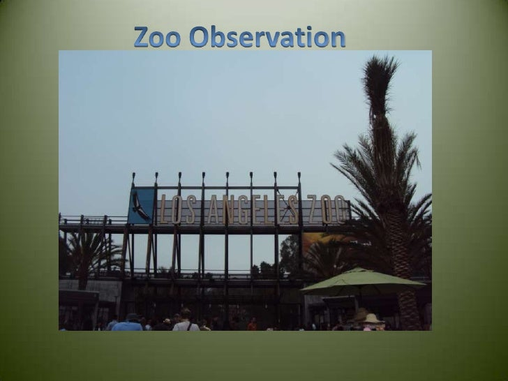 Zoo Observation<br />