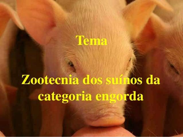Tema Zootecnia dos suínos da categoria engorda