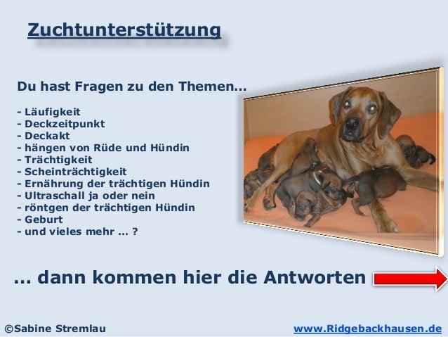 www.Ridgebackhausen.de©Sabine Stremlau Zuchtunterstützung Du hast Fragen zu den Themen… - Läufigkeit - Deckzeitpunkt - Dec...