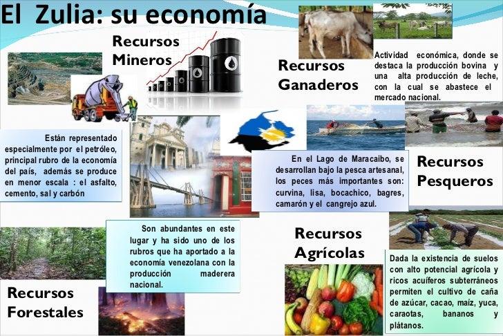 El  Zulia: su economía  <ul><li>Actividad  económica, donde se destaca la producción bovina  y una  alta producción de lec...