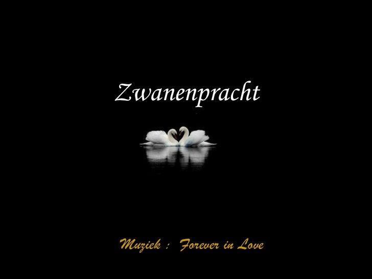 Zwanenpracht 由  tsaidr Muziek :  Forever in Love