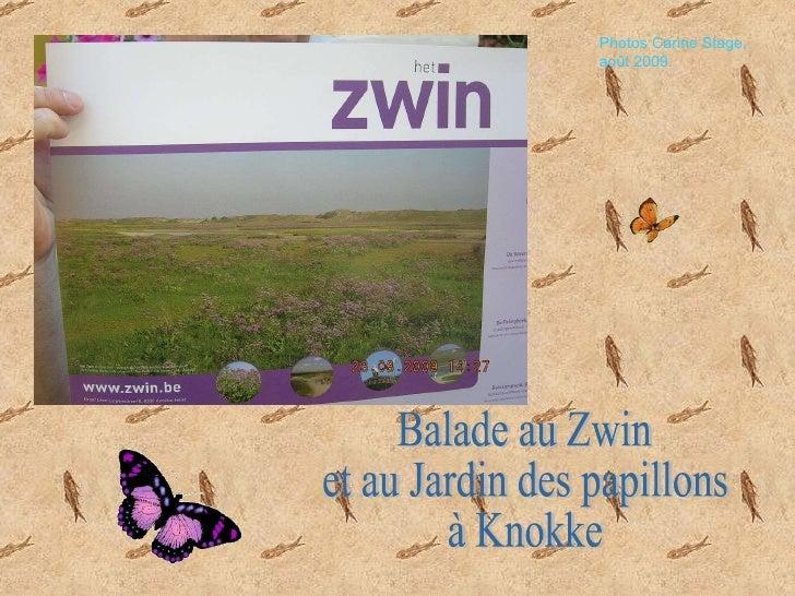 Balade au Zwin  et au Jardin des papillons  à Knokke Photos Carine Stage, août 2009.