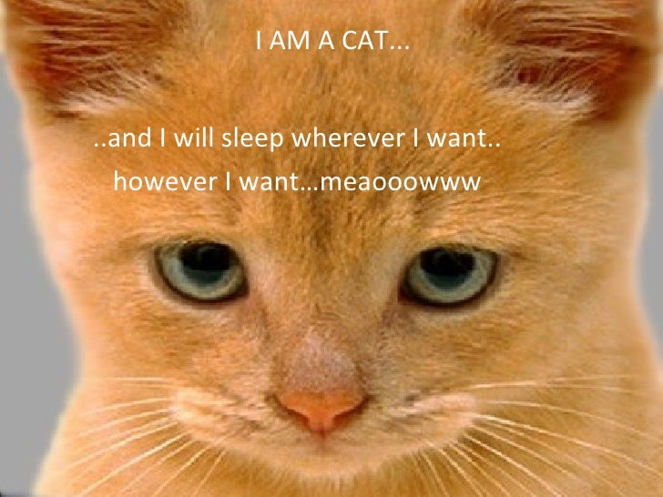I AM A CAT...   ..and I will sleep wherever I want..   however I want…meaooowww