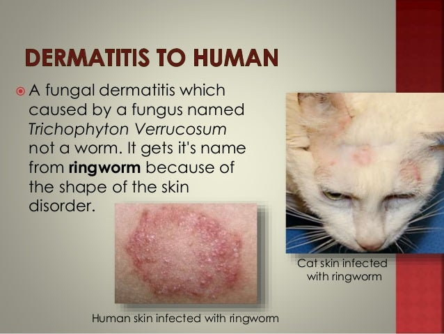 Worms In Cat Fur
