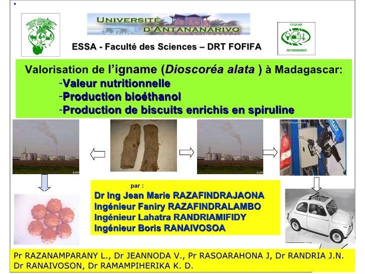 ESSA - Faculté des Sciences – DRT FOFIFA <ul><li>Valorisation de  l'igname ( Dioscoréa alata  )  à Madagascar: </li></ul><...