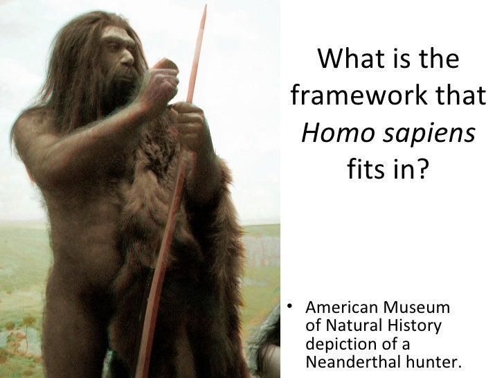 What is the framework that  Homo sapiens  fits in? <ul><li>American Museum of Natural History depiction of a Neanderthal h...