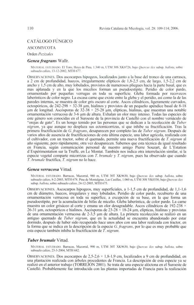 110CATÁLOGO FÚNGICOASCOMYCOTAOrden PezizalesGenea fragrans Wallr.Revista Catalana de Micología, vol. 28: 109-114; 2006.MAT...