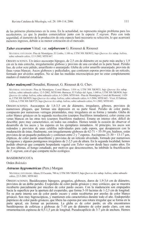 Revista Cata lana de Micologia, vol. 28: 109-114; 2006. 111de las primeras plantaciones en la zona. En la actualidad, no r...