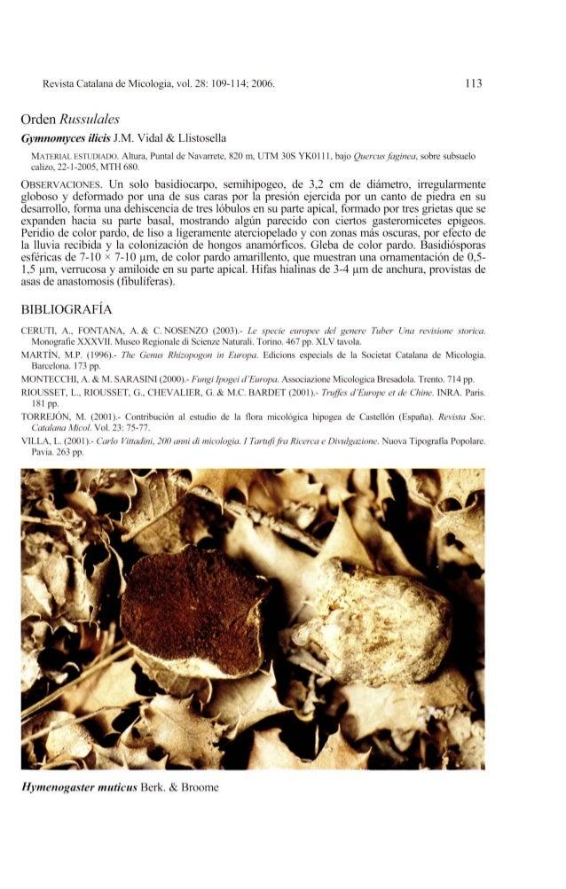 Revista Catalana de Micologia, vol. 28: 109-114; 2006. 113Orden RussulalesGymnomyces ilicis 1M. Vidal & LlistosellaMATERIA...