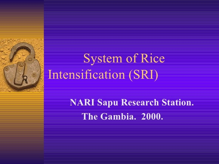 System of Rice  Intensification (SRI) NARI Sapu Research Station.  The Gambia.  2000.