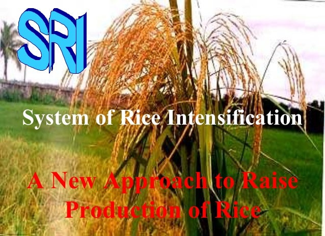 System of Rice Intensification A New Approach to Raise Production of Rice