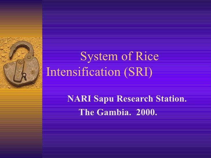System of Rice  Intensification (SRI) Mustapha Ceesay NARI Sapu Research Station.  Gambia.  2000.