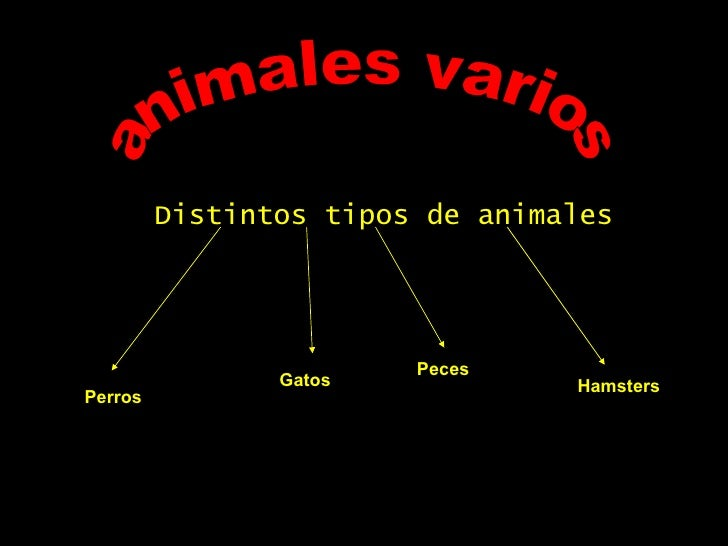 animales varios Distintos tipos de animales Perros Gatos Peces Hamsters