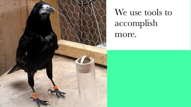 """Defending the Bird"". Justin Collins, Alex Smolen, Twitter"