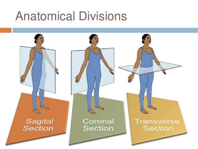 anatomy phys intro Section a: introduction to anatomy and physiology module 1-a: organization of the human body.