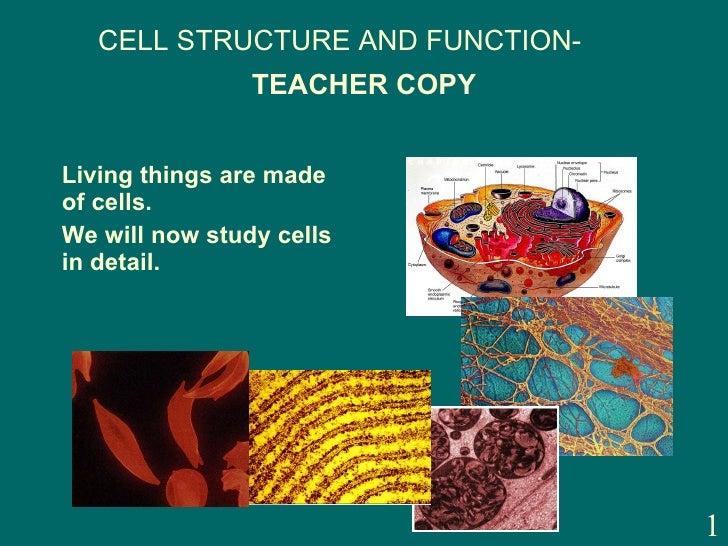 TEACHER COPY <ul><li>Living things are made of cells. </li></ul><ul><li>We will now study cells in detail. </li></ul>CELL ...