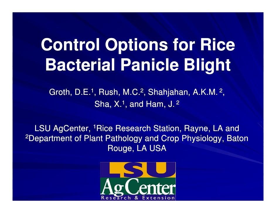 Control Options for Rice    C t l O ti      f Ri    Bacterial Panicle Blight       Groth D E 1, Rush M C 2, Shahjahan A K ...