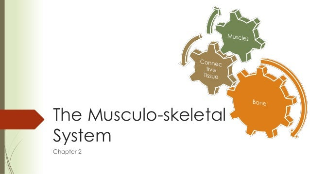 The Musculo-skeletalSystemChapter 2