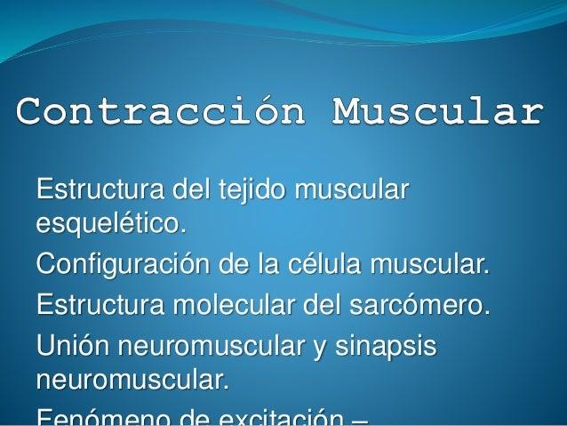 Contraccion Muscular Udla