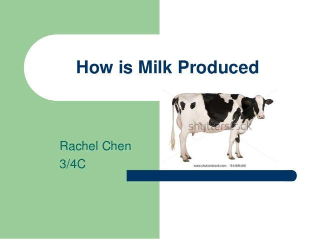 How is Milk Produced Rachel Chen 3/4C