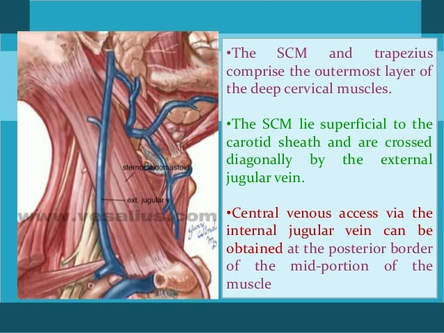 Surgical anatomy and approaches to neck
