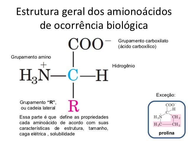 004 Aminoacido