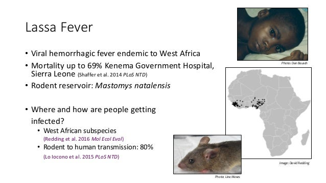 a history of lassa fever in west africa Lassa fever, a zoonotic viral infection, is endemic in west africa the disease causes annual wide spread morbidity and mortality in africa, and can be imported by travelers.