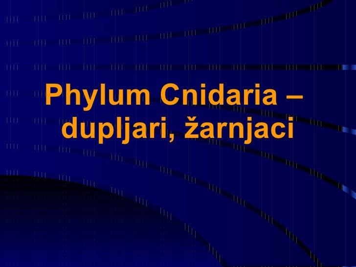 Phylum Cnidaria –  dupljari, žarnjaci