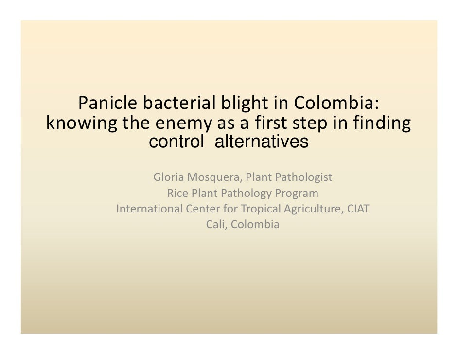 Panicle bacterial blight in Colombia:                          g knowing the enemy as a first step in finding             ...