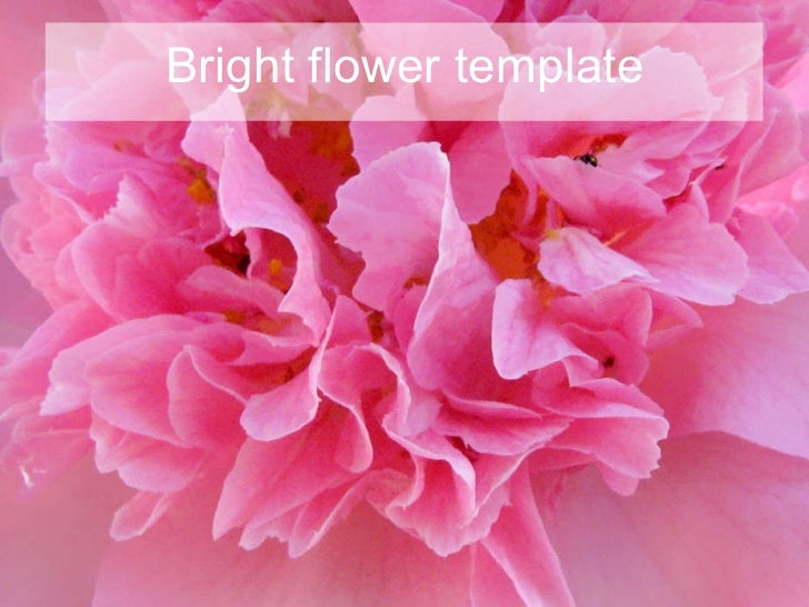 Bright flower template