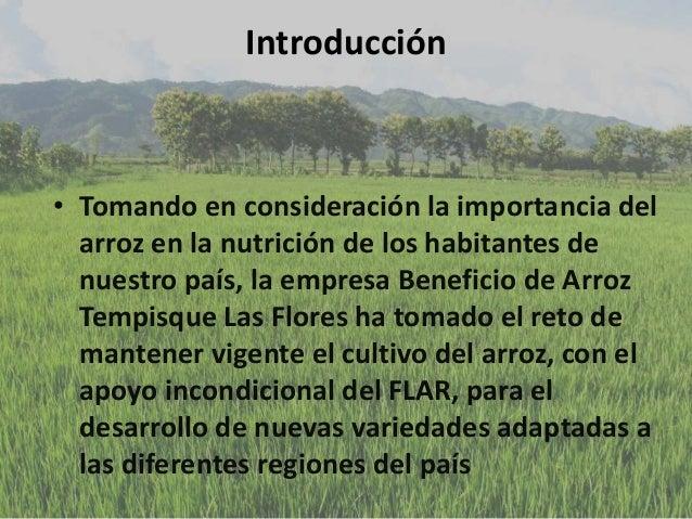 Introducción • Tomando en consideración la importancia del arroz en la nutrición de los habitantes de nuestro país, la emp...
