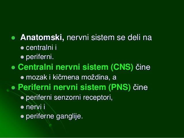 Centralni nervni sistem Slide 2