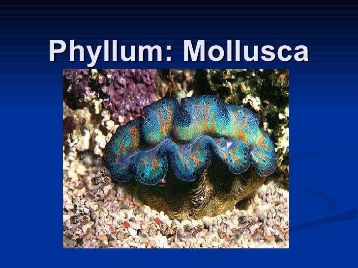 Phyllum: Mollusca