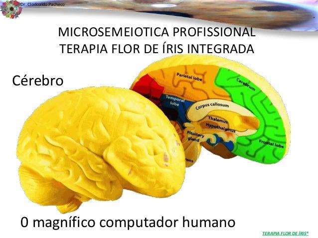 .  Dr. Clodoaldo Pacheco  Cérebro  0 magnífico computador humano  TERAPIA FLOR DE ÍRIS®  MICROSEMEIOTICA PROFISSIONAL  TER...