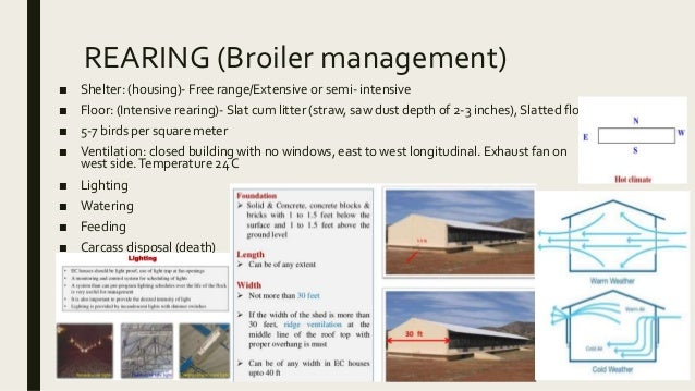 broiler cockerel production in semi intensive system Extensive system and to a lesser extent in a semi-intensive system under subsistence farming  information on production system, flock size, ownership and.