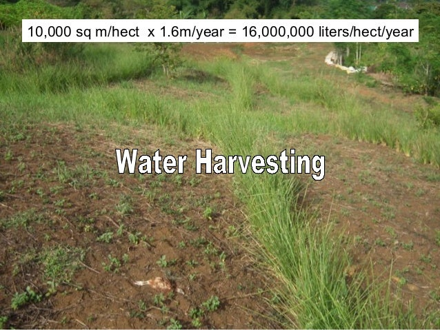 10,000 sq m/hect x 1.6m/year = 16,000,000 liters/hect/year