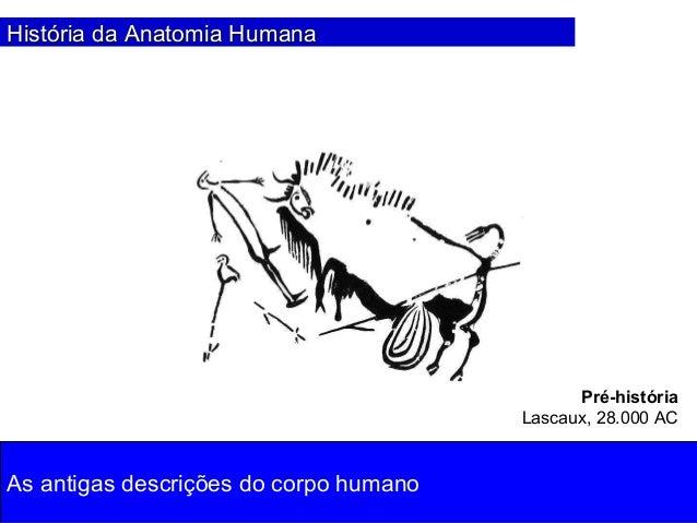 01. história da anatomia Slide 2