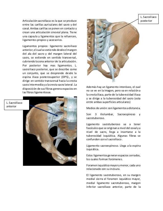 01 . pelvis ósea