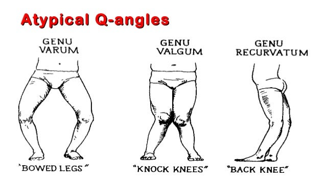 01 Knee Anatomy