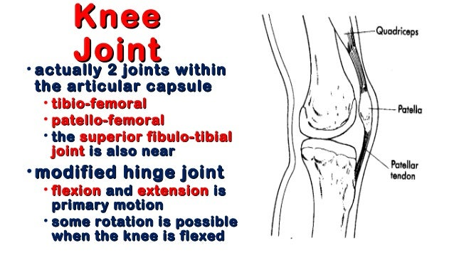 01 knee anatomy anatomy of theanatomy of the knee jointknee joint fahad zakwanfahad zakwan md5md5 2 ccuart Images