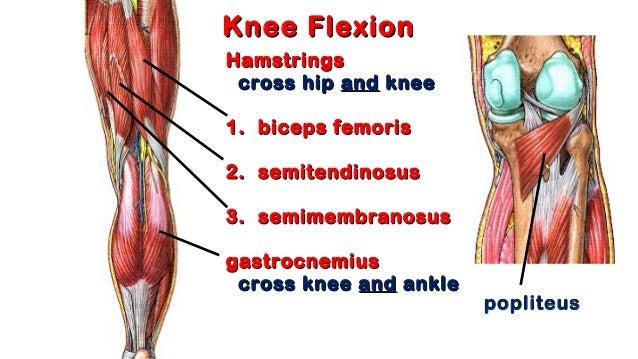 Flexion in anatomy