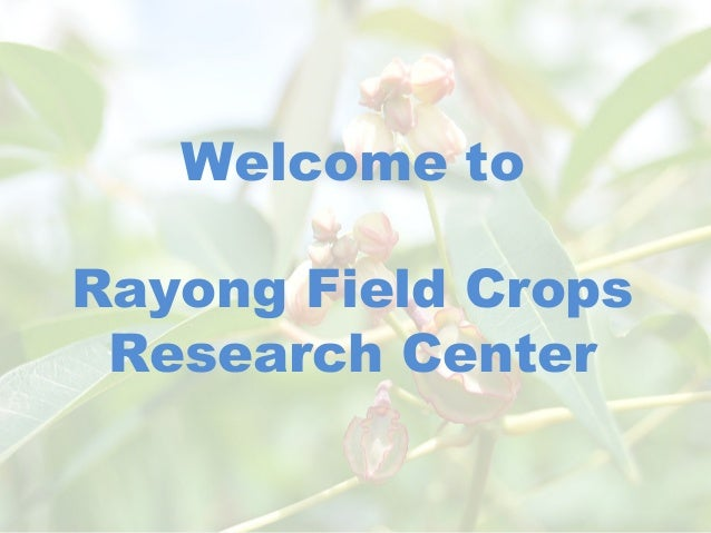 Welcome to Rayong Field Crops Research Center