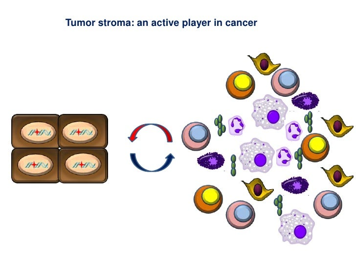 Tumor stroma: an active player in cancer<br />