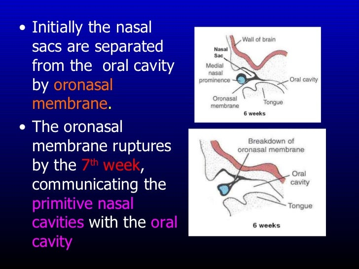 Separates the oral and nasal cavities foto 415