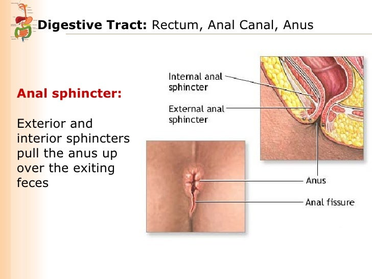 Intro to anal