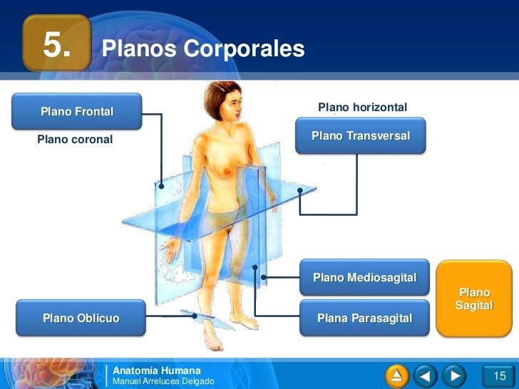 01.Introducción al cuerpo humano