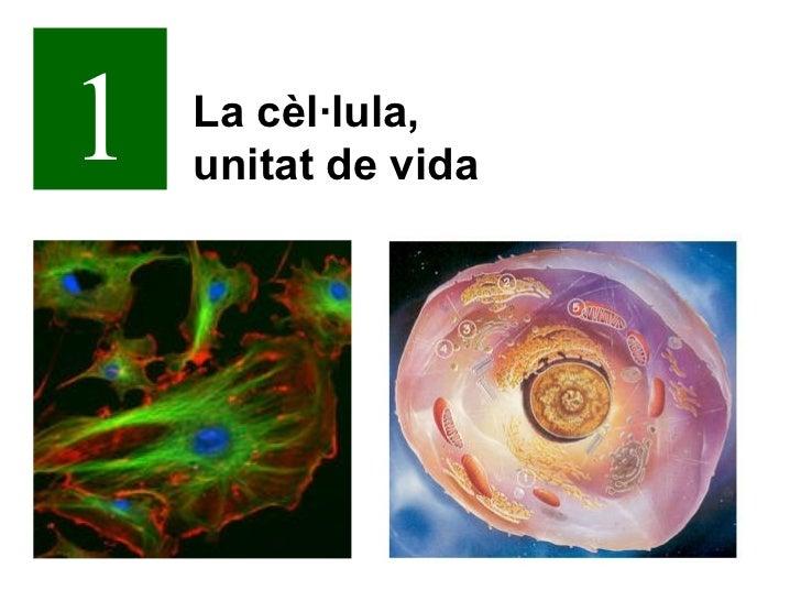 1   La cèl·lula,    unitat de vida